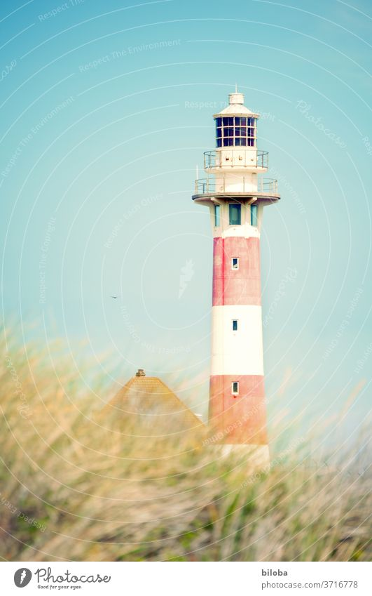 Lighthouse in the bright sunlight Grass Reddish white house roof Summer North Sea Middelkerke Belgium Sky Building Architecture east