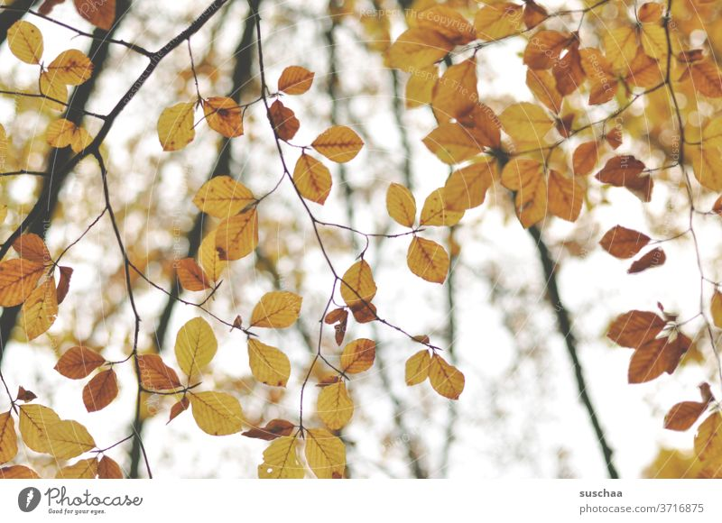autumn leaves Autumn Season melancholy branches foliage Autumn leaves Nature tree Autumnal Autumnal colours Twigs and branches Early fall Transience change
