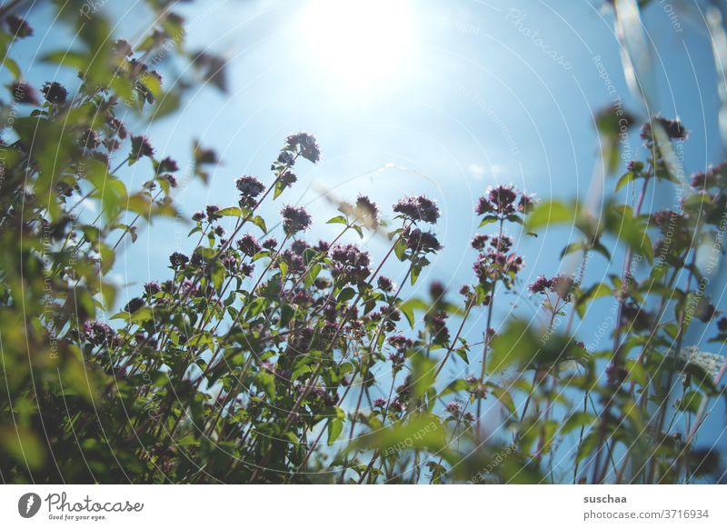 summer, sun and a flower meadow Summer Summery Meadow Flower meadow flowers Sun Sunlight warming Warmth wax Growth plants Photosynthesis Sky Grass bleed