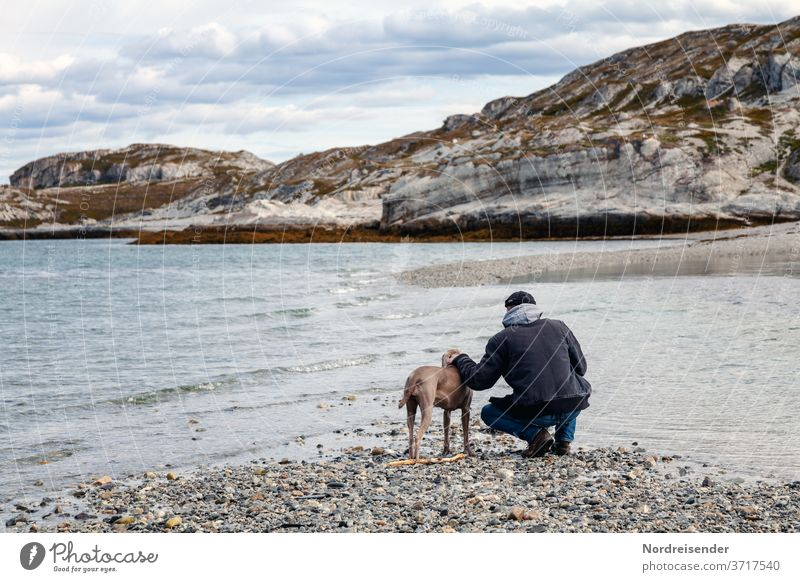 Man and Weimaraner hunting dog at the sea in Norway Rear view Full-length portrait Day Copy Space top Exterior shot Colour photo Finnmark Life Rocky coastline