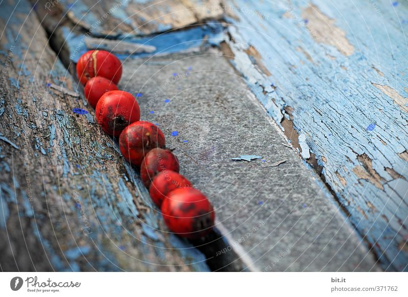 in the groove Autumn Decoration Collection Line Blue Red Competition Concentrate Creativity Argument Teamwork Lanes & trails Furrow Chain Berries Wood Derelict