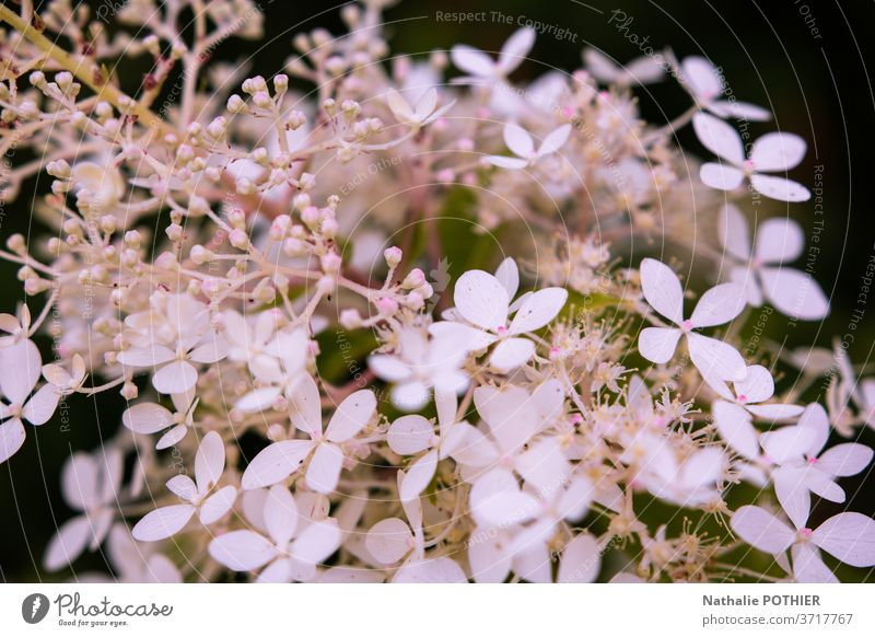 Pretty white flowers in close-up in the garden pretty blur shadow petal petals bokeh leaves springtime blossom backgrounds simplicity purity growth seasons