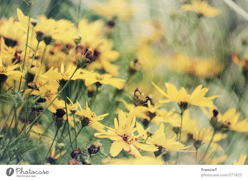 Nature Plant Green Beautiful Summer Flower Yellow Blossom Natural Happy Garden Park Dream Growth Idyll Wind