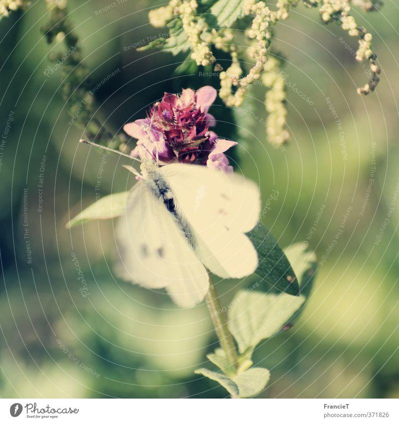 Nature Green White Summer Plant Flower Animal Leaf Warmth Movement Freedom Happy Blossom Garden Natural Park