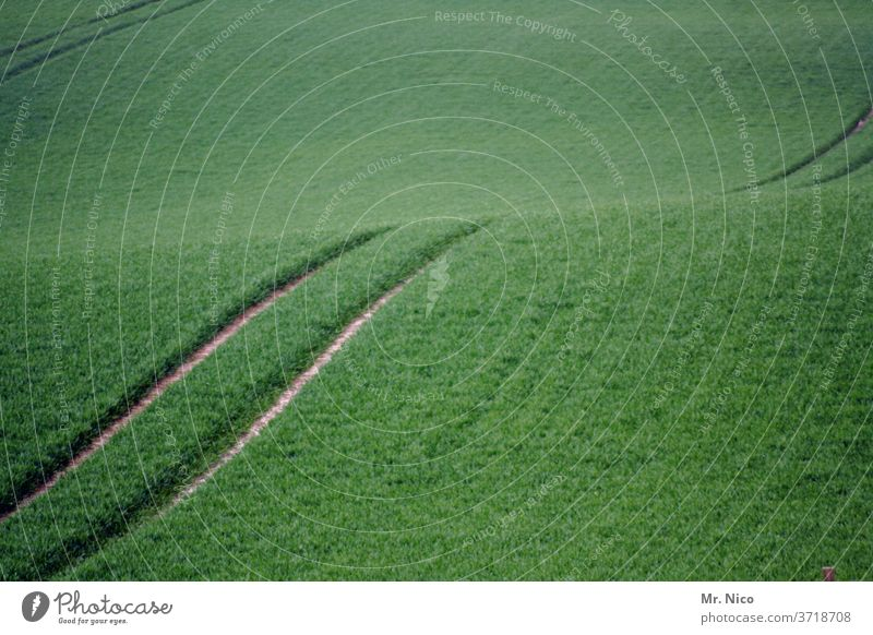 tracks in the field Furrow Tracks Agriculture Field green Harvest Tractor track Cornfield Lanes & trails Growth Nature Agricultural crop Environment Grain Plant
