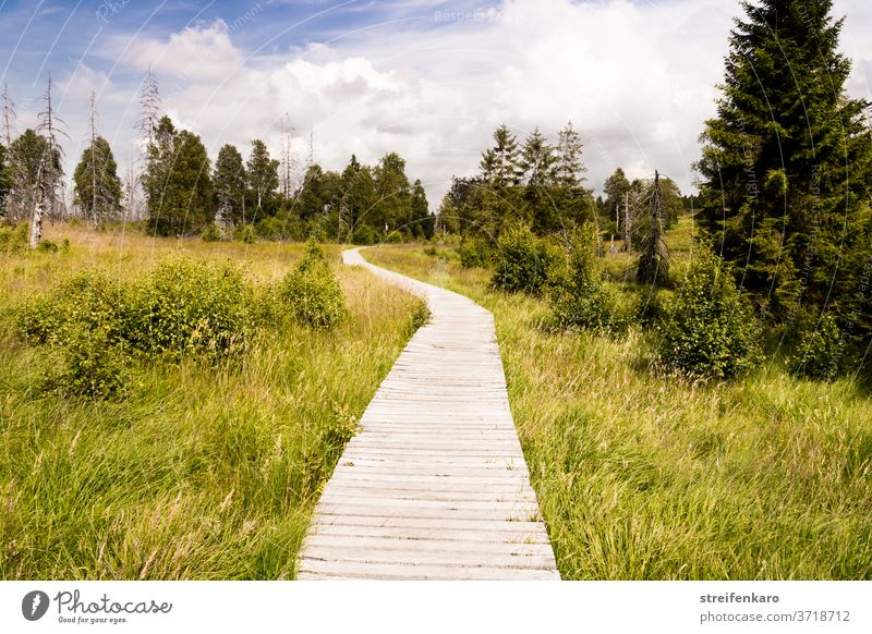 The wooden footbridge in the Hautes Fagnes meandered through the green grass and disappeared between the trees wooden walkway High venn Belgium Nature reserve