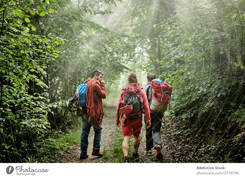 Group of hikers with backpacks in forest traveler mountaineer men walk climber equipment adventure trekking together path company activity nature vacation