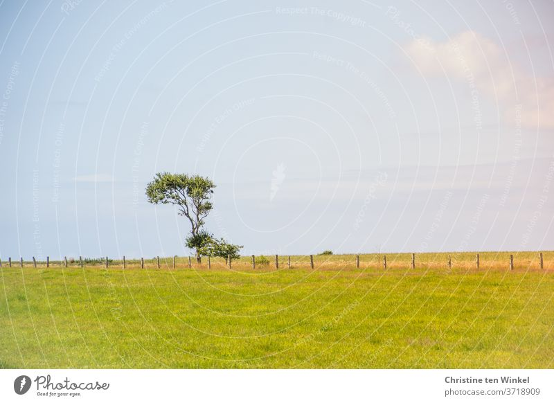 A tree that has grown crookedly by the North Sea wind stands quite alone on the horizon behind a fence on a meadow. by oneself Warped Meadow Willow tree