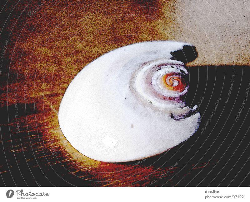 Ocean Broken Mussel Filter