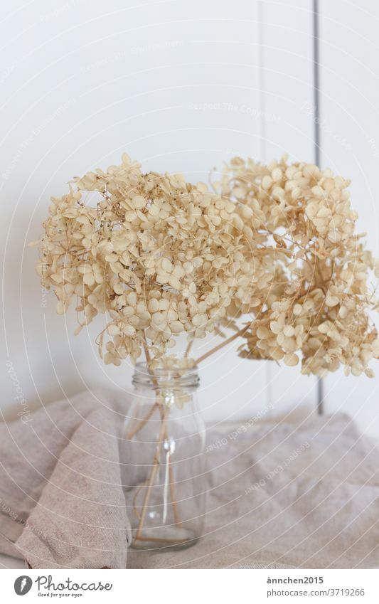 Light dried hydrangeas in a glass vase Garden bleed flowers Summer Plant Hydrangea Detail Colour photo Bright White Dried Dried flower Decoration Interior shot
