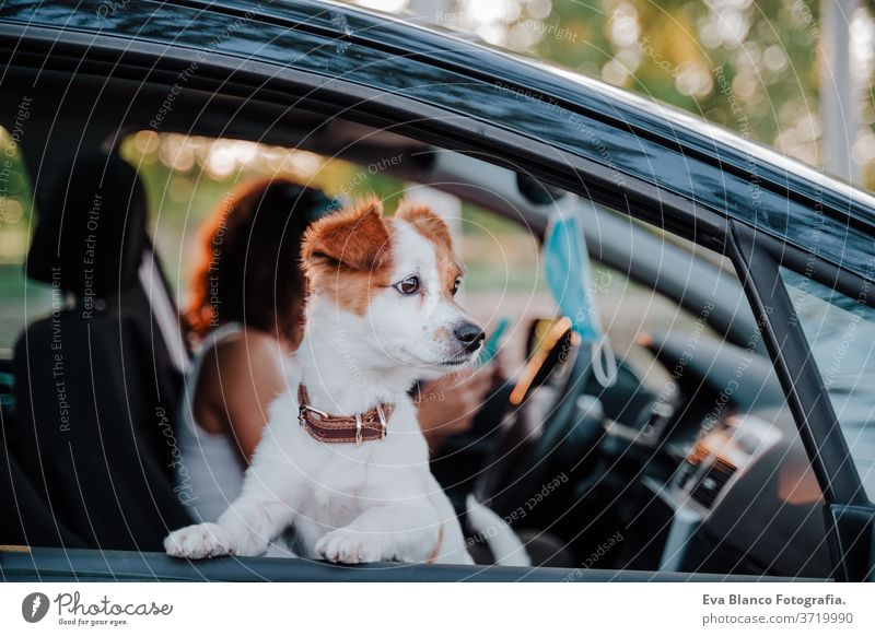 young woman wearing protective mask in a car. cute jack russell dog besides. Travel and new normal concept drive travel together love outdoors lifestyle