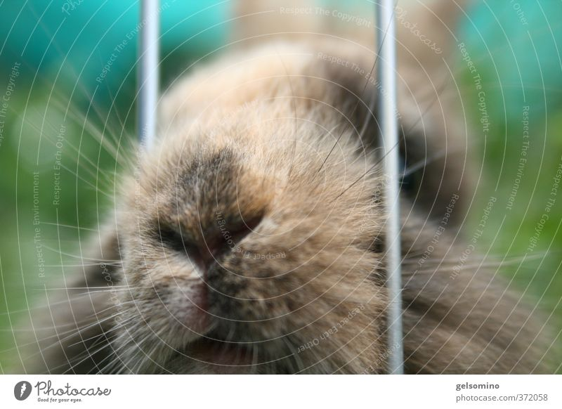 Nature Green Animal Hair and hairstyles Small Brown Wait Mouth Nose Pelt Facial hair Near Brunette Pet Hare & Rabbit & Bunny