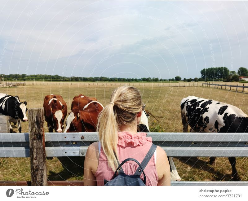 Blonde woman looking at cows in the pasture Woman Willow tree chill Animal Agriculture Meadow Cattle Exterior shot Herd Livestock Nature Farm animal