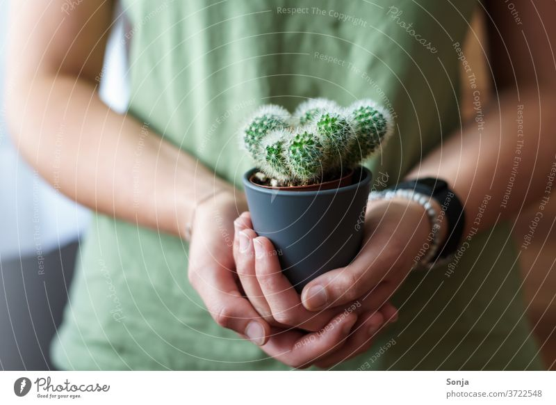 Young woman with a small cactus in her hands. Close-up, partial view Cactus Woman youthful stop natural green Plant Thorn Pain Thorny Nature Houseplant