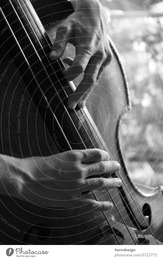 Double bass playing, plucking pizzicato Plucking Jazz Musician Musical instrument Jazz music Classical Make music Sound Black and white photography Detail