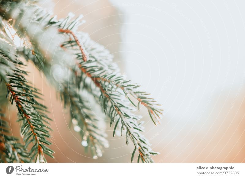 snow on a free tree branch Abstract Backgrounds Branch - Plant Part Bright Celebration Christmas Close-up Cold Temperature Coniferous Tree Copy Space Decoration