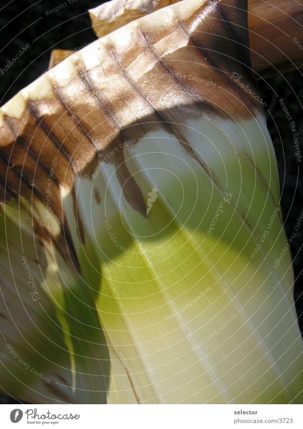 palm leaf Palm tree