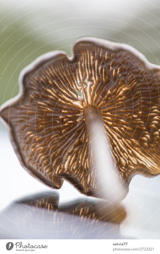 Anticipation | of the mushroom season Mushroom Nature Plant Autumn slats Shallow depth of field Close-up Mushroom cap edible mushrooms mushroom pick