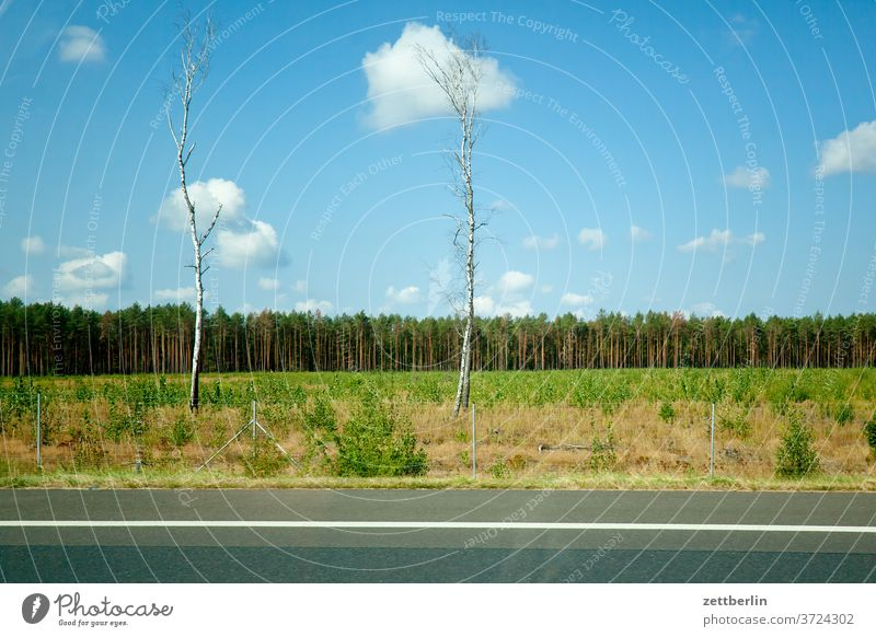 Two birches on the motorway Street Highway Transport voyage Tourism individual transport Curb Landscape Forest Field Agriculture Birch tree Electricity pylon