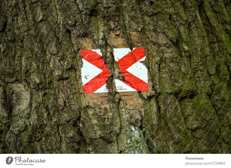 The road markings could no longer withstand the strong growth tree Tree trunk bark wood path marking Signs and labeling Crucifix Brown Red White Exterior shot