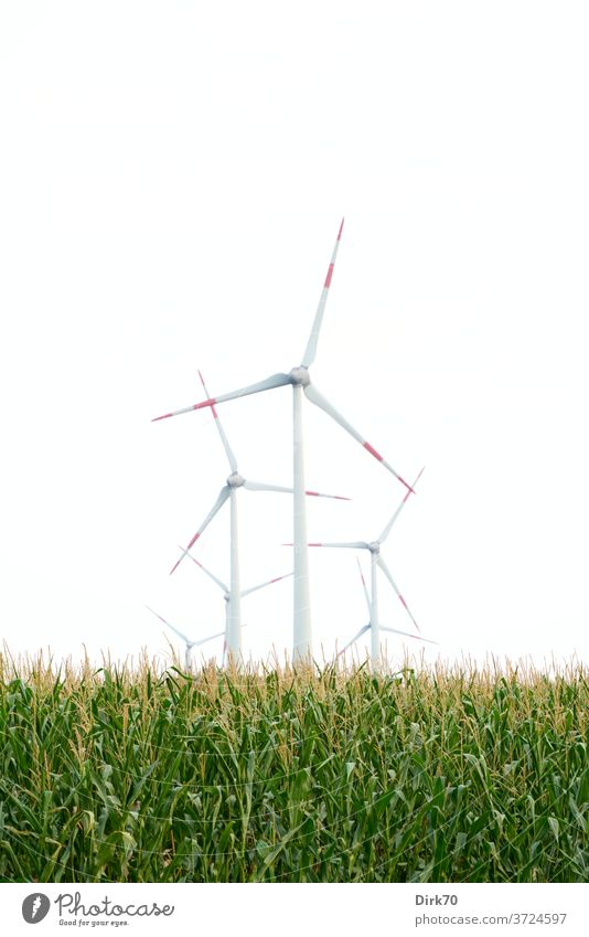 Wind turbines in the maize field wind power wind energy converter Wind energy plant Sky Energy industry Renewable energy electricity ecologic Alternative