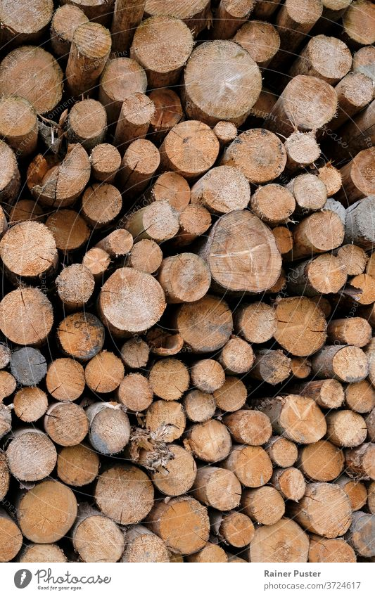 Stacked tree logs in a forest background bark brown cut fire firewood forestry logging lumber natural nature pattern pile stack stacked texture timber trees
