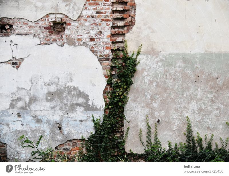 The face of the bear on the wall lost place Old Broken Decline Transience Past Ruin Wall (barrier) built Wall (building) House (Residential Structure) Facade