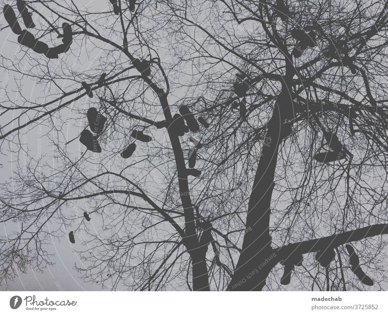 fast fashion tree Footwear Back-light twigs Sky Twigs and branches Branchage Deserted Exterior shot hang Worm's-eye view Autumn Nature Autumnal