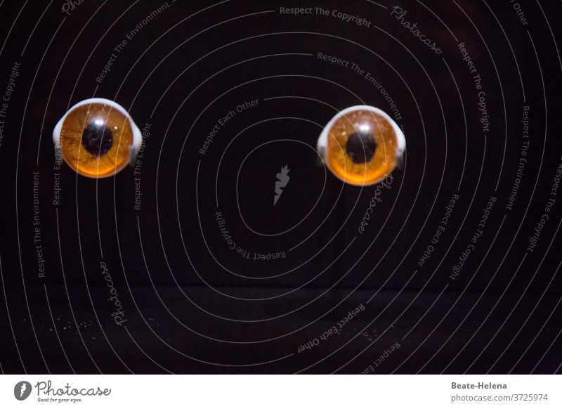 The moment: two brown eyes against a black background peer Eyes Brown iris Pupil Looking Black Mysterious Close-up Detail Vision Mock-up Attraction Colour photo
