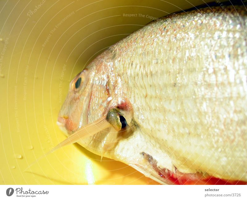 last-time swimming Water Nutrition Fish
