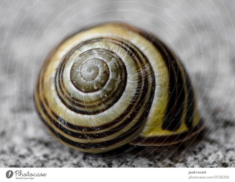 snail shell Snail shell Protection Structures and shapes Spiral Crumpet Macro (Extreme close-up) Animal Round Symmetry Sheath Uninhabited
