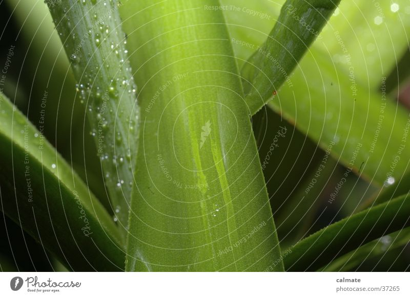 Plant Drops of water Wet Palm tree Agave Yucca