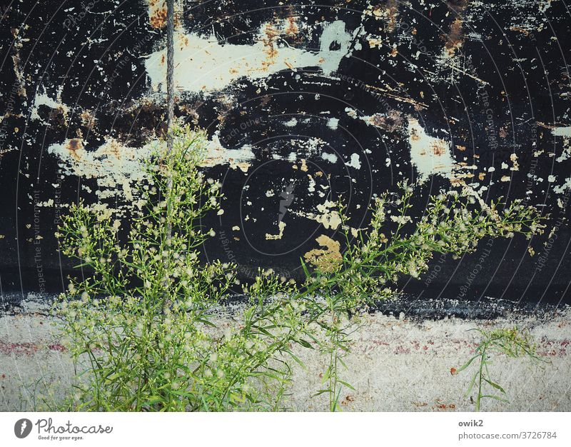 Stocktaking Environment Nature Plant bushes Growth Weed Colour photo Exterior shot Detail Deserted Day Sunlight Long shot Landscape Copy Space top Close-up