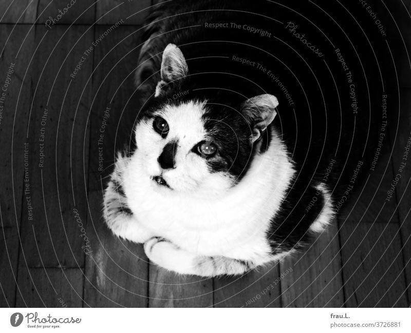 Don't look at me like that, both the cat and the photographer thought. Cat Living or residing see Pet Animal Animal portrait Looking Sit
