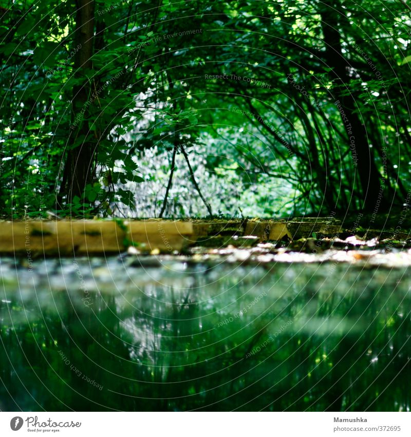 Nature Green Water Summer Plant Tree Animal Forest Environment Dark Life Lanes & trails Natural Moody Wild Glittering
