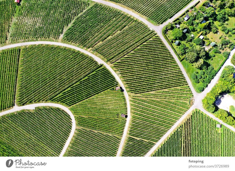 Vineyard from above from on high plan Image aerial photograph drone Drones Images Aerial photograph Bird's-eye view green Wine growing vines Agriculture