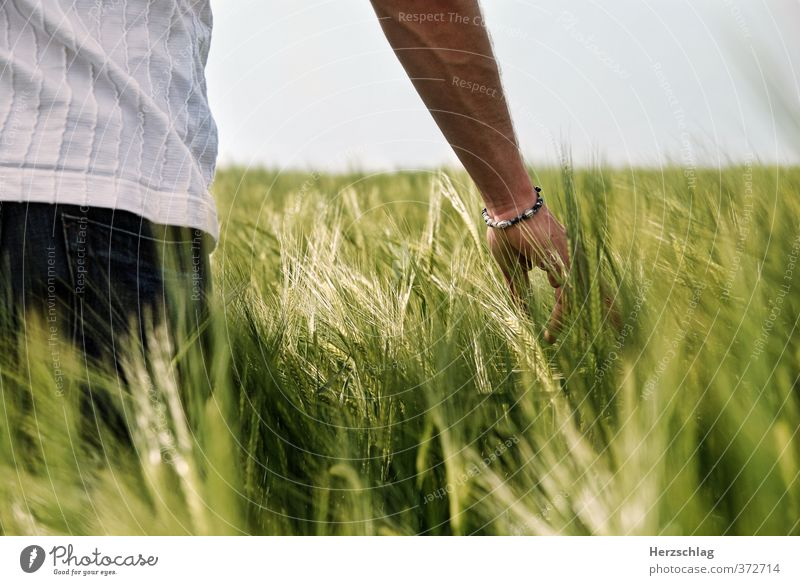 Green Summer Hand Relaxation Love Sadness Spring Freedom Happy Dream Field Arm Contentment Esthetic Hope Touch
