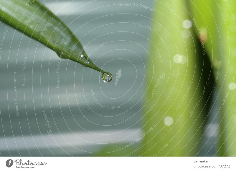 Plant Drops of water Wet Palm tree Yucca