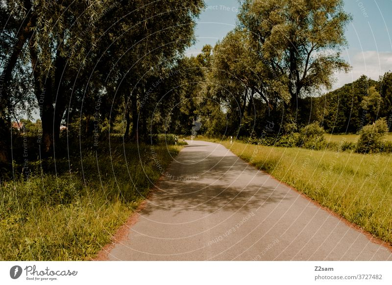 A deserted country road in Bavaria Country road Street Deserted Nature Green Summer Sun cycle path road cycling trees Bushes Meadow Lonely Village Rural Shadow