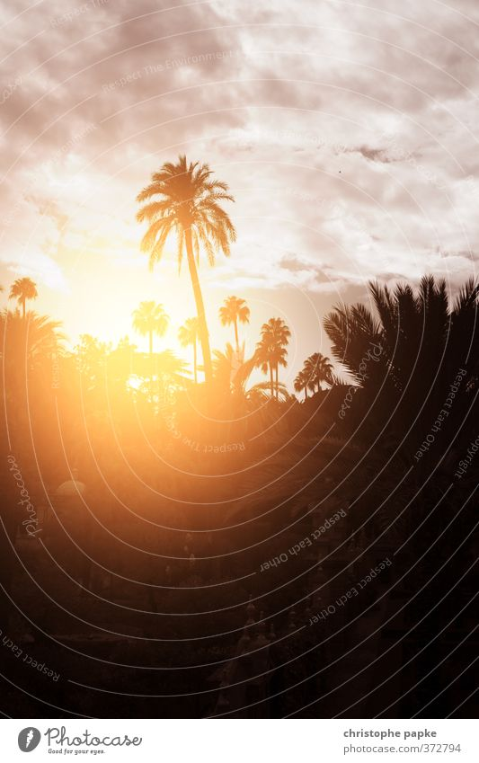 palm romance Vacation & Travel Far-off places Summer Summer vacation Sun Landscape Sky Clouds Sunrise Sunset Sunlight Beautiful weather Palm tree Garden Park