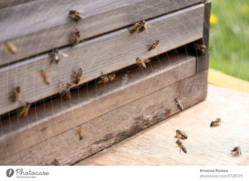 bees approaching the beehive Honeybees Beehive bee colony Nesting place keep beekeepers arrive pollen Pollen Panties Prey wood apiary Bee-keeping Nature animals