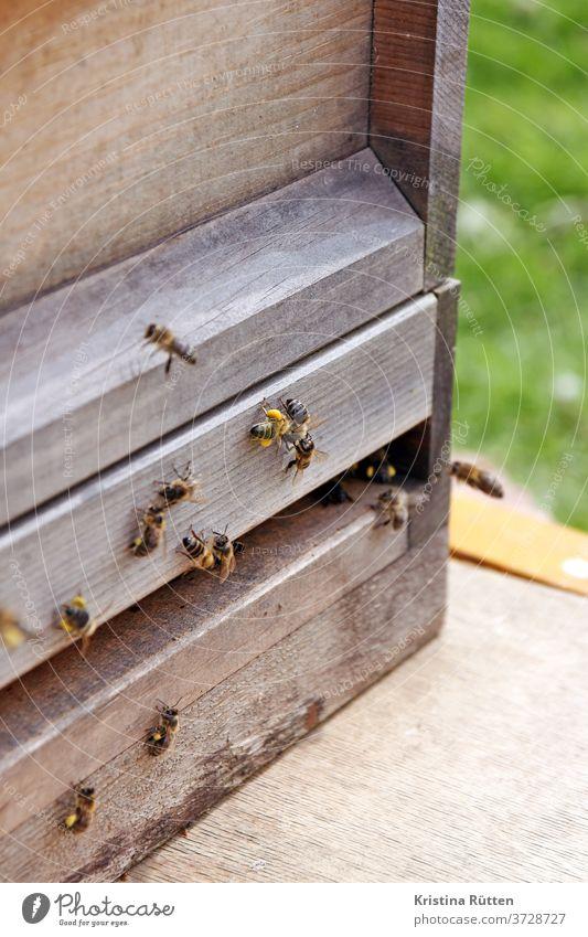 Bees at the beehive bees Honeybees Beehive bee colony Nesting place keep beekeepers approach arrive pollen Pollen Panties Prey wood apiary Bee-keeping Nature
