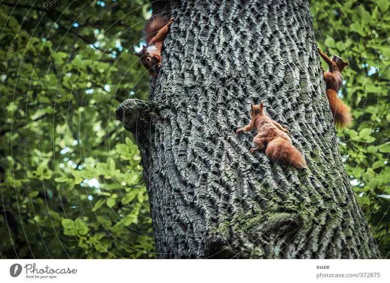 Nature Green Tree Red Joy Animal Environment Playing Funny Small Natural Brown Wild animal Cute Group of animals To hold on