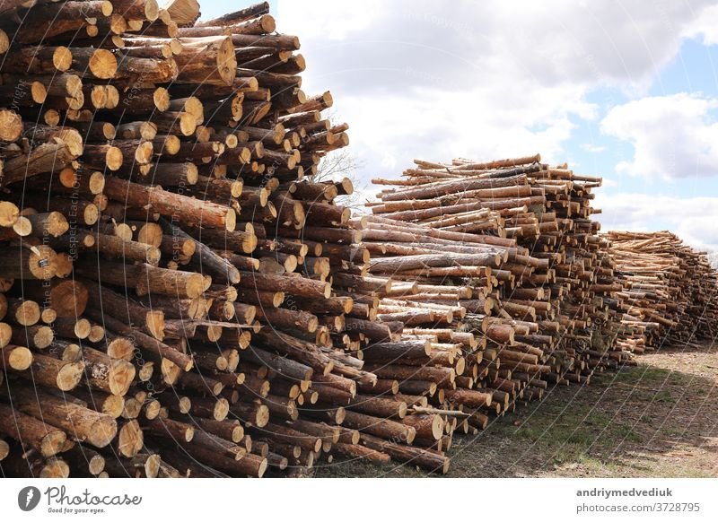 Side view of commercial timber, pine tree logs after clear cut of forest. uncontrolled deforestation. selective focus. tree trunks background wood nature stack