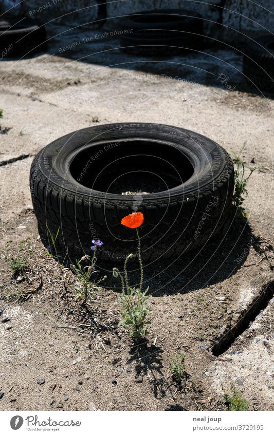 Poppy blossom, scrap yard, car tires Car tire Trash Recycling Plant bleed Environmental pollution Problem Rubber Plastic Contrast Black Red Trashy