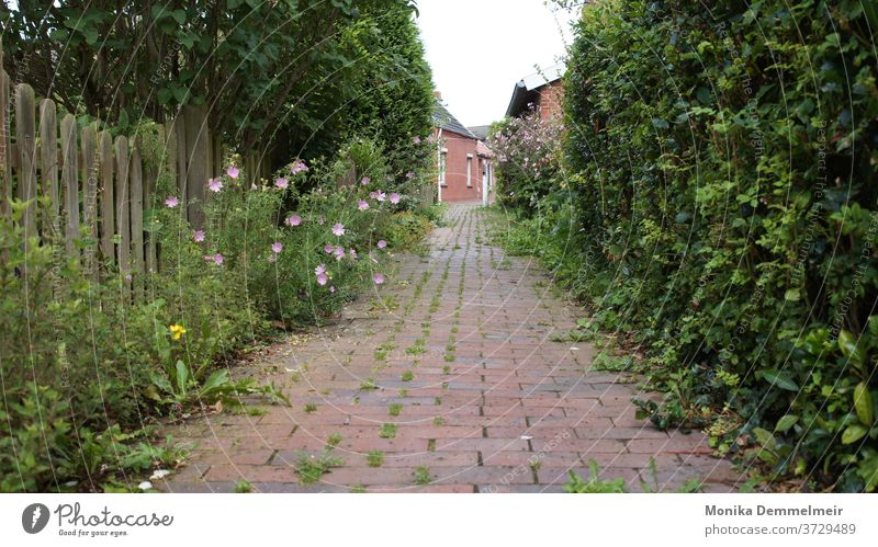 small alley Alley Architecture Old town Exterior shot Historic Facade Wall (barrier) Street Wall (building) built Deserted Lanes & trails