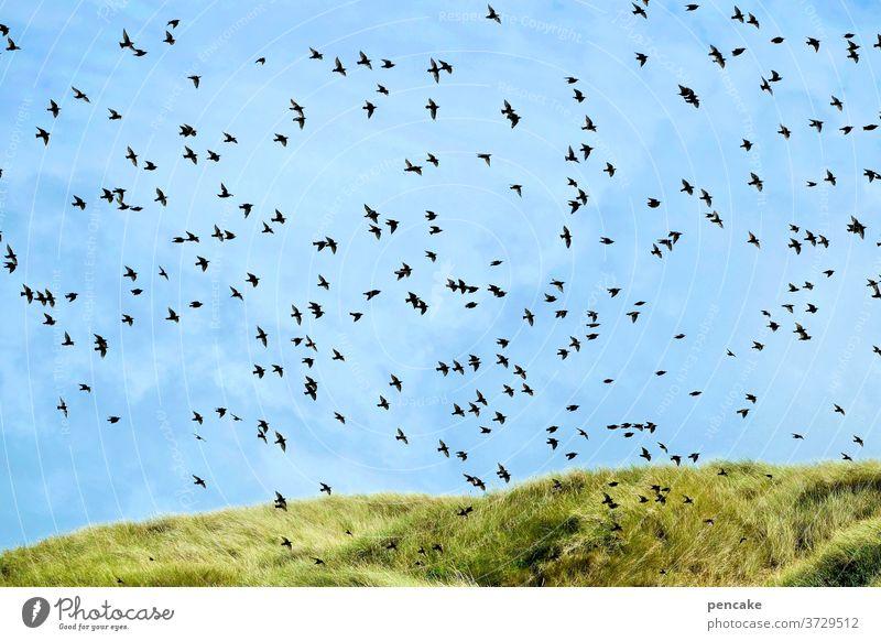 dansommer II Dünen Dünengras Strandhafer Sommer Himmel blau Vögel Schwarm Landschaft Urlaub Nordsee