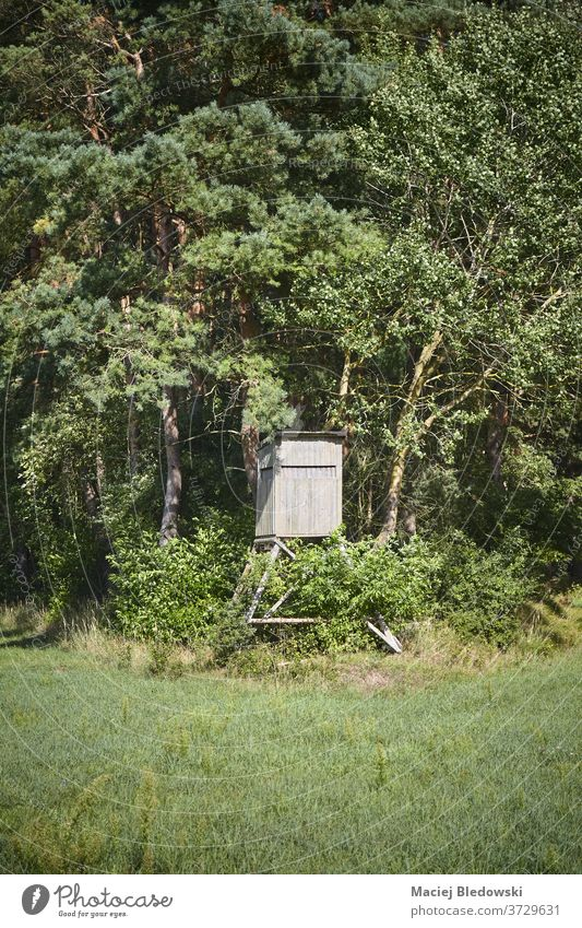 Wooden deer stand on forest edge. hunting hide blind nature season observation outdoor rural meadow tree wooden field tower hunting pulpit view green sky