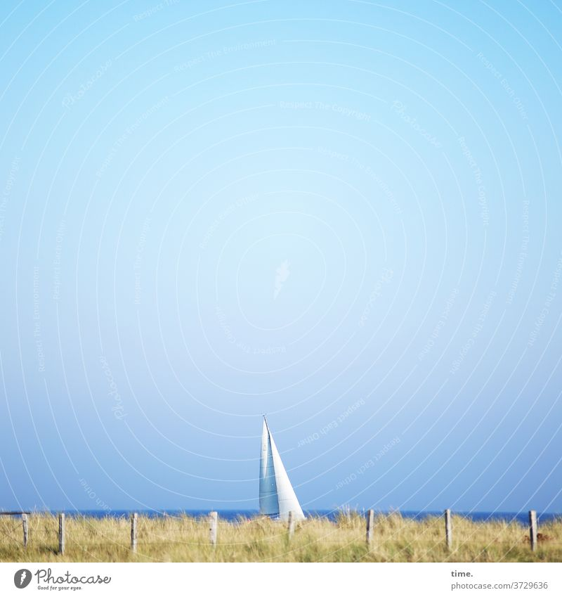 Stories from the fence (80) Sailboat Sailing Baltic Sea Marram grass Fence Ocean Horizon Sky sunny Beautiful weather Whimsical Hide Perspective sight