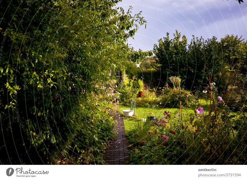 Garden in the evening Branch tree flowers blossom bleed Relaxation holidays Grass Sky allotment Garden allotments Deserted Nature Plant Lawn tranquillity